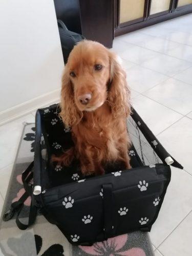 Автомобилна седалка за куче photo review